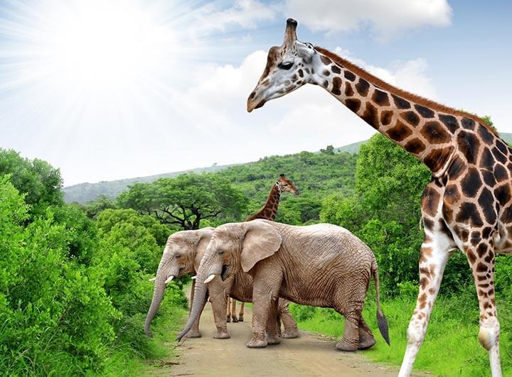 Élménytúra az elefántok földjén