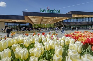 Tulipánvirágzáskor Hollandiában