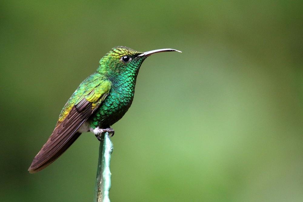 Közép-Amerika természeti kincsei